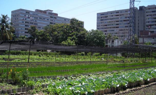 permacultura-urbana2