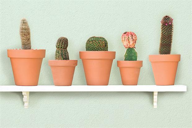 Cactus: Penes
