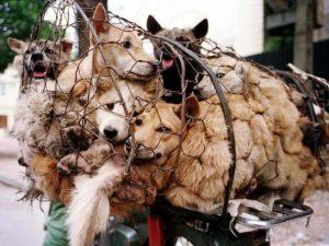 Festival Yulin en China 2