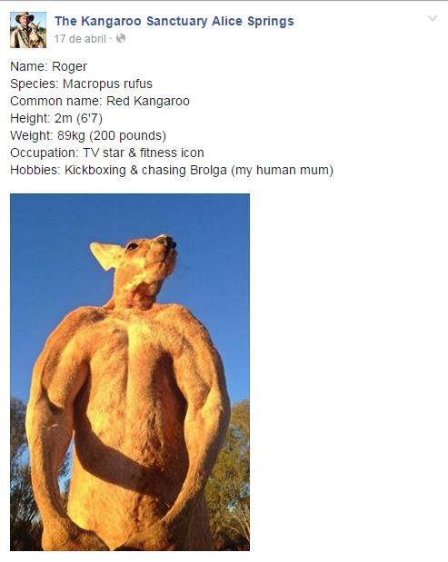 roger el canguro (2)