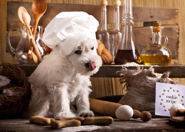 Dog-Chef