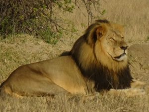 cecil-leon