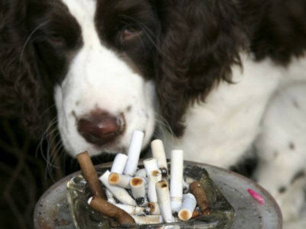 fumar cerca de los animales