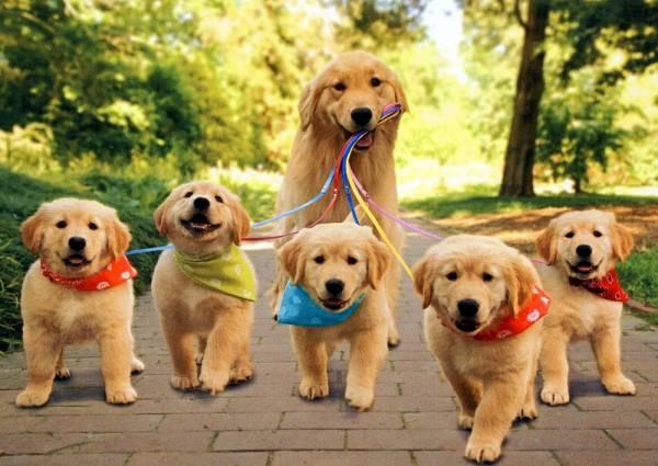 Tener una camada no va a asegurar la salud de tu perra y cuanto antes la esterilices, menos problemas tendrán