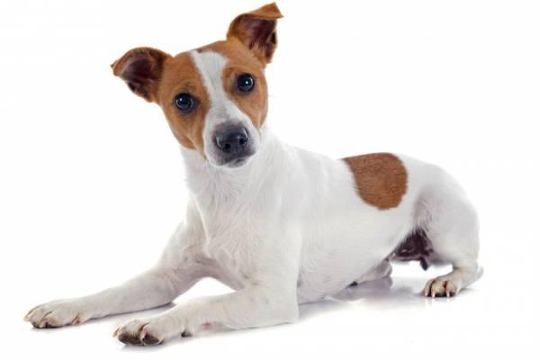 Recientes estudios han demostrado que y que lo perros en realidad son capaces de distinguir ciertos colores Fuente: http://www.ecoticias.com/naturaleza/110781/10-mitos-sobre-los-perros-que-te-sorprenderan