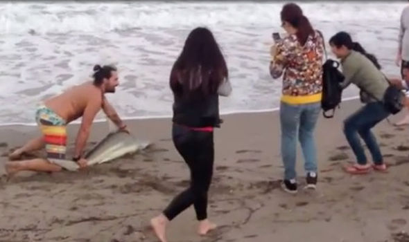 matar un tiburon por una foto