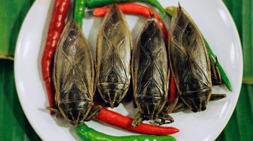Thailand Bug Restaurant