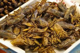 cucarachas fritas