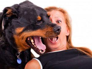 eliminar el mal aliento de los perros