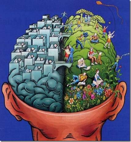 hemisferios-del-cerebro