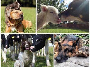 los-perros-son-el-mejor-amigo