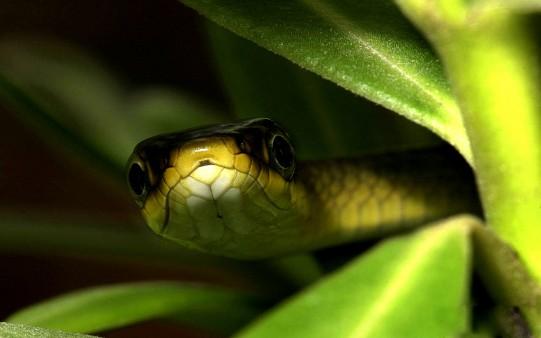 serpiente_camuflada