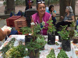 Puedes encotrar plantas tropicales, medicinales, infusiones y té