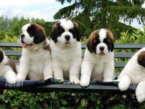 Guía científica para comprender a los perros