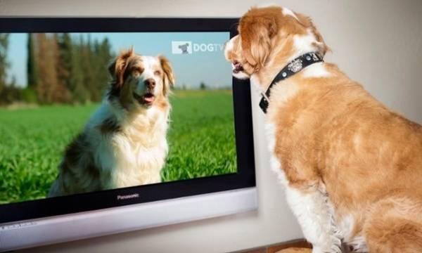 perros-televisor