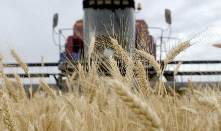 30-mil-toneladas-de-trigo