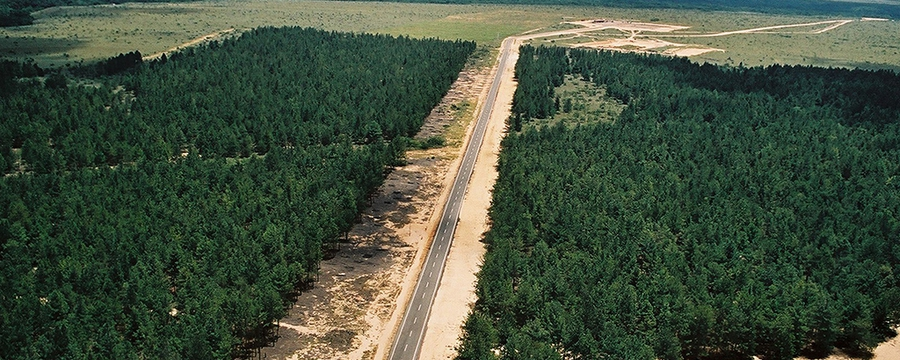 bosque-de-uverito