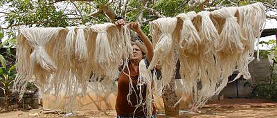 Conocimientos y técnicas tradicionales vinculadas al cultivo y procesamiento de la curagua