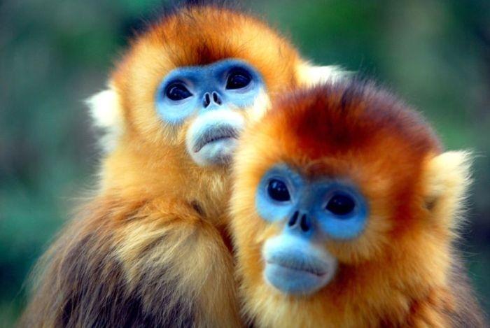 Animales exóticos protegidos en China