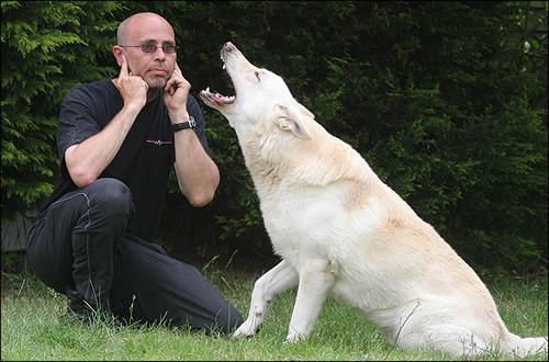 aúllan los perros