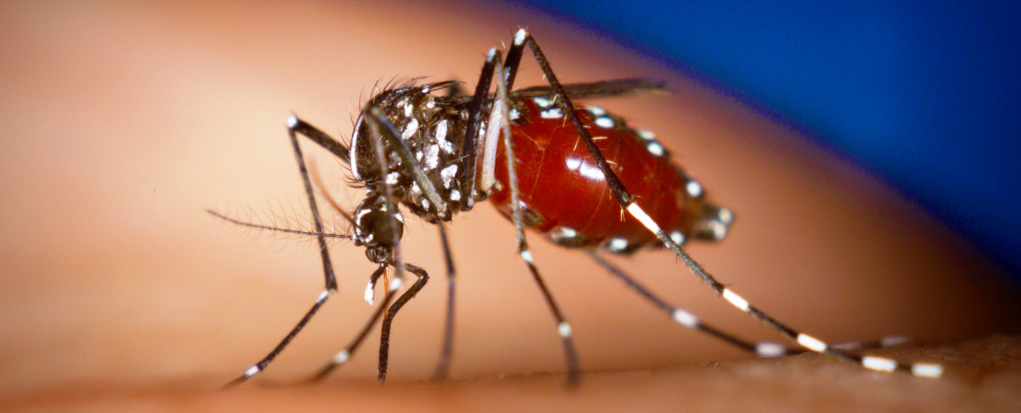segundo caso importado del virus Chikungunya