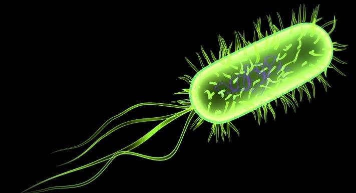 Bacteria E Coli