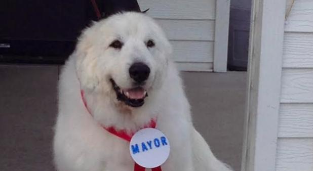 Duke el perro alcalde