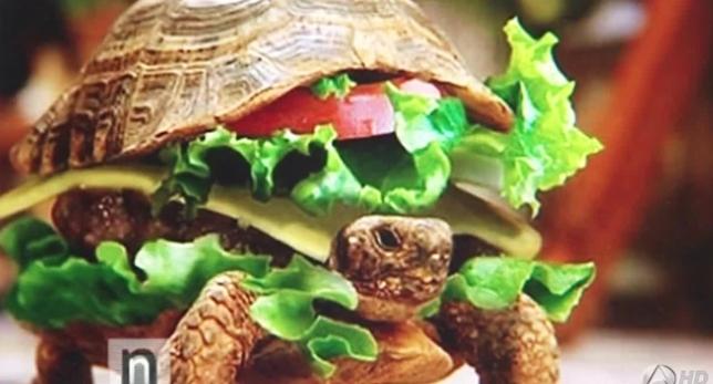Tortuga disfrazada de hamburguesa