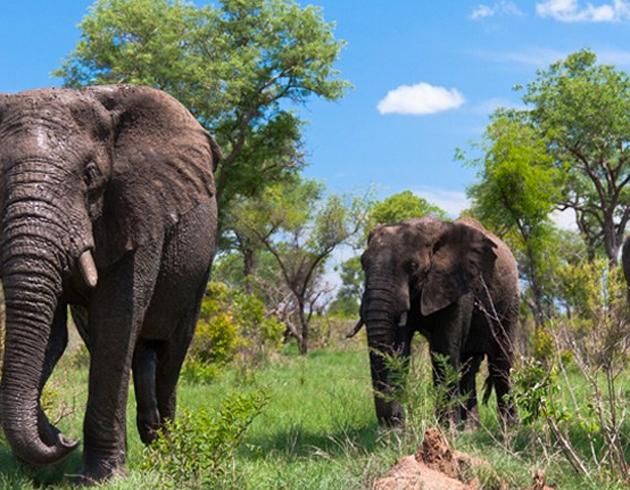 Recorrer en safari el Parque Nacional Kruger en Sudáfrica