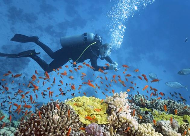 Viajar hasta Australia para bucear cerca de las populares barreras de coral del Océano Índico.