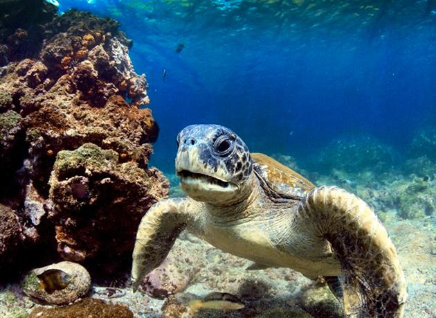 Las islas Galápagos, en Ecuador. Allí los turistas pueden disfrutar de un baño en sus bellas playas acompañados por las populares tortugas que habitan las islas.