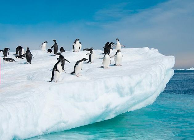 La experiencia de conocer a los pequeños animales trajeados que habitan La Antártida atrae a muchos de los participantes en esta iniciativa.