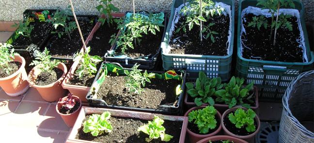 Cu les son los vegetales m s f ciles de cultivar for Cultivar vegetales en casa