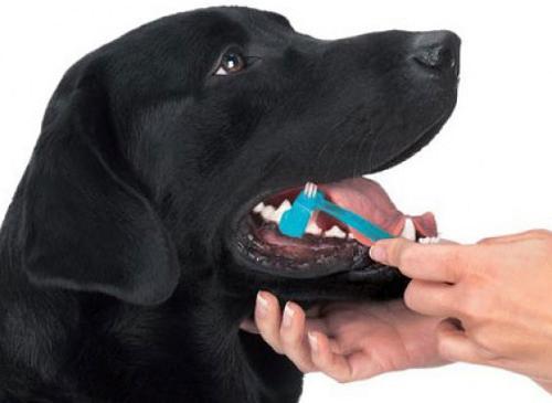 perro-tiene-mal-aliento (1)